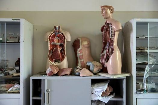 models of Liver Disease